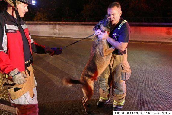 구조된 개가 구조대원에게 키스를 퍼붓다(사진,