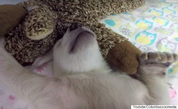 꿈속에서 무척 바쁜 아기
