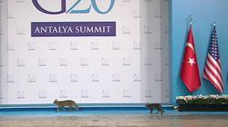 G20 정상회의의 보안시스템을 뚫은