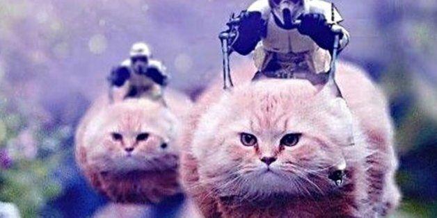 경찰의 '트윗 자제' 부탁에 고양이 사진으로 화답한 벨기에