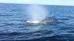 보트를 타고 가는데 돌고래, 고래, 물개가 한꺼번에