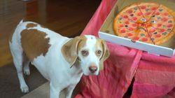 말하는 피자 vs. 레몬 비글의