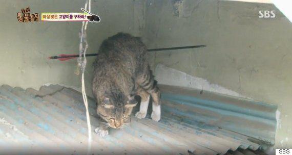 'TV 동물농장'의 '화살 맞은 고양이', 화살 쏜 40대 남성 불구속