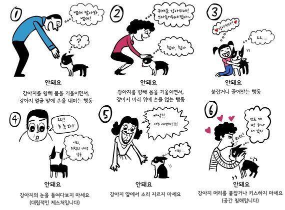 외국인이 말하는 '이해하기 어려운 한국의 반려견