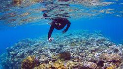 지구 온난화에서 산호초를 구하려 '수퍼 산호'