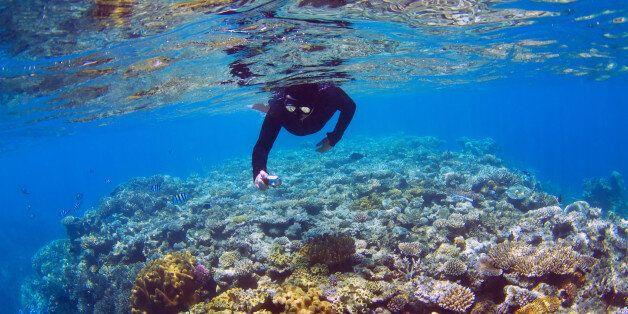 과학자들이 지구 온난화에서 산호초를 구하기 위해 '수퍼 산호'