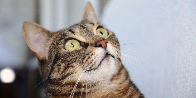 고양이들은 대체 왜 오이를 보고 놀라는