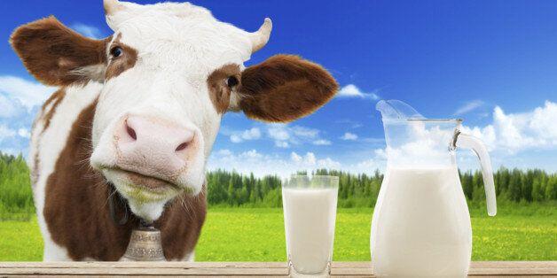 우유가 넘쳐나도 가격을 내리지 못하는 3가지