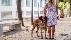 Zamora cobrará un impuesto de 9 euros por cada perro