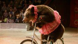 하와이가 동물 공연을 금지하는 미국의 첫번째 주가