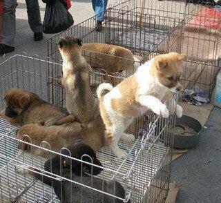 길에서 동물을 팔면
