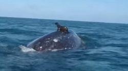 고래 등을 타고 노는