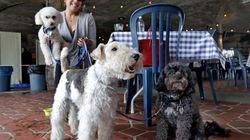 뉴욕 식당에선 이제 개와 식사를 할 수