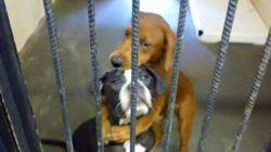안락사 직전 서로를 껴안았던 개들의