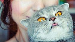 고양이가 최악의 동물인 31가지