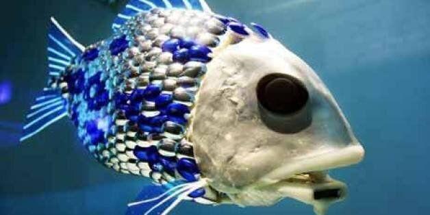 '4대강 로봇물고기' 1억원 뇌물 받은 연구원