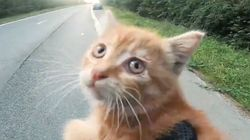 Motorcyclist Stops Traffic To Save Cute Kitten From Busy