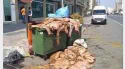 France: la fachosphère détourne la photo d'une benne à ordures remplie de peaux de mouton à