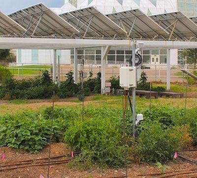 Avec les systèmesagrivoltaïques, les plants poussent à l'ombre des panneaux