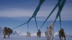 Au Groenland, les chiens de traîneau menacés par la fonte des