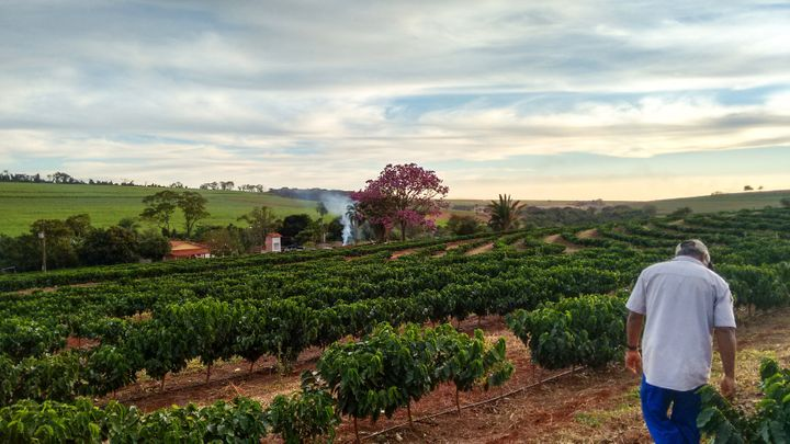 """""""Existem regiões que a agroecologia consegue atender, mas 100% é muito complicado"""", explica bióloga sobre condições do solo brasileiro."""