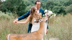 Oh Deer, This Buck Photobombed A Couple's Wedding