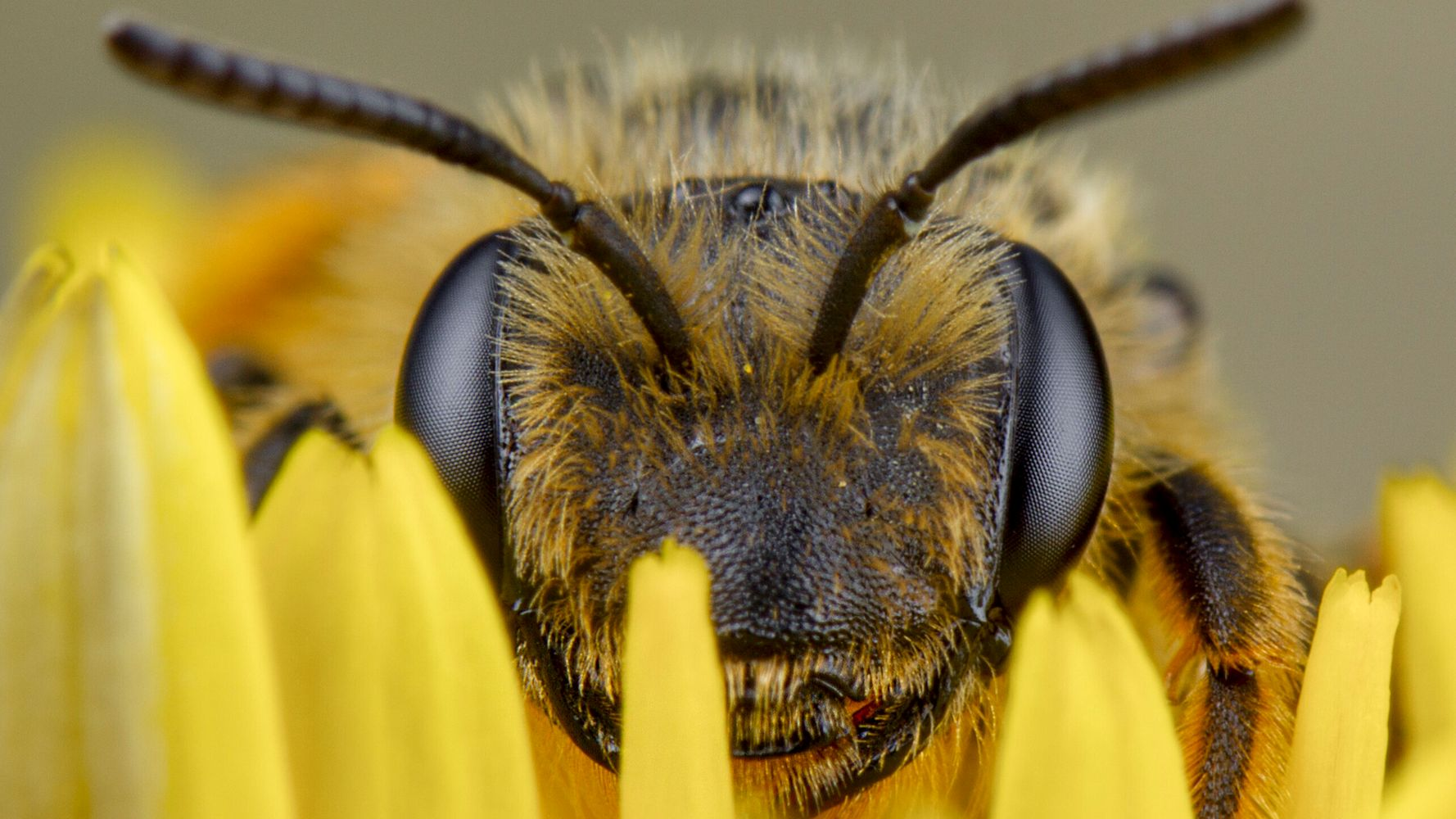 Beekeepers Petition Court To Block EPA Approval Of Bee