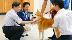 天皇、皇后両陛下が動物愛護センターを訪問