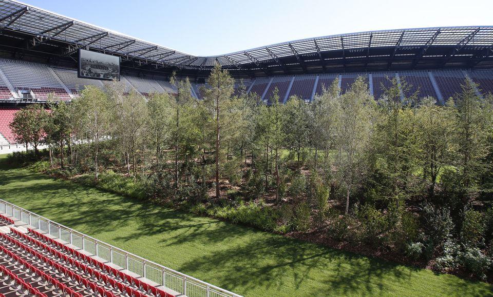 Ένας δάσος μεγαλώνει μέσα σε ένα γήπεδο ποδοσφαίρου στη