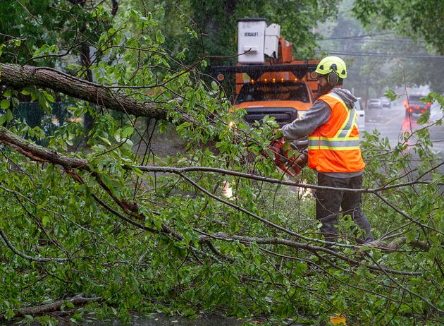 A worker removes a fallen tree blocking a road in Dartmouth, N.S. as hurricane Dorian approaches on Sept....