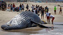 Πως η λατρεία των Ιαπώνων να παρακολουθούν τις φάλαινες ίσως μπορεί να τις
