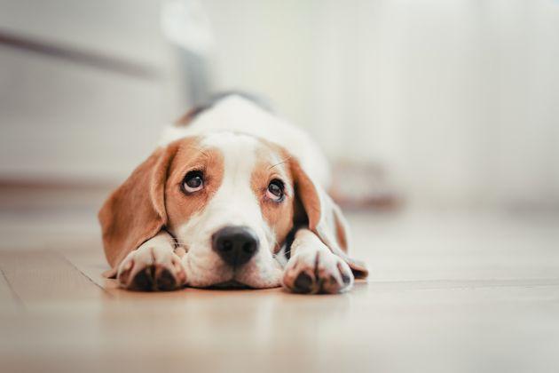 Μυστηριώδης ασθένεια σκοτώνει τους σκύλους στη