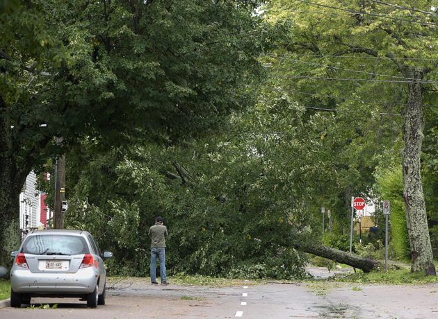 An unidentified man takes a photo of a fallen tree in Charlottetown on Sept. 8,