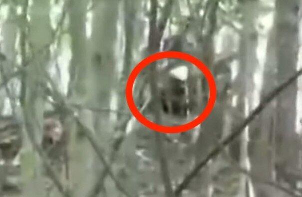 Bigfoot's Watching Me: N.C. Man Shares Footage Of Something In The Woods