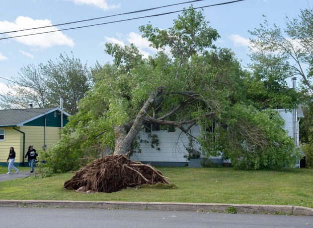 An uprooted tree sits on the roof of a house in Dartmouth, N.S., on Sunday after heavy rain and winds...