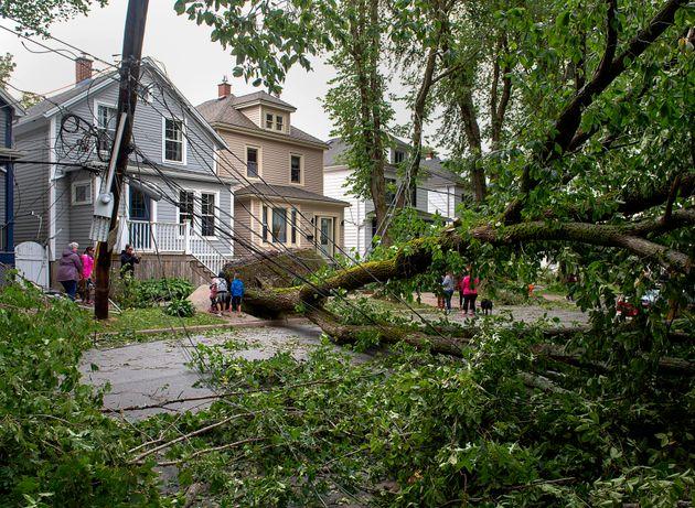 Des arbres ont été déracinés en plein quartier résidentiel à