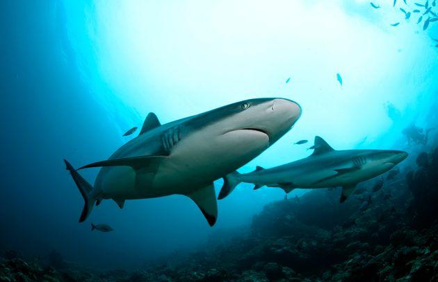 Τι θα συνέβαινε εάν δεν υπήρχαν καρχαρίες στους