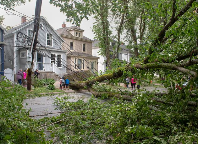 A street is blocked by fallen trees in Halifax on Sept. 8, 2019 following Hurricane