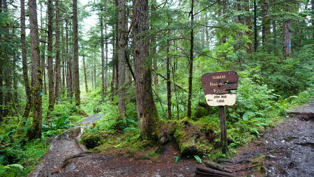 Signage to Muir's cabin on Auk Nu Trail in the Tongass National Forest at the fork of two dirt paths leading past mossy trees and logs on a rainy day, Juneau, Alaska, USA
