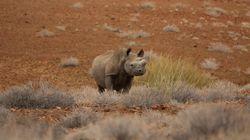 40만 달러를 내고 죽인 코뿔소 '트로피' 반입을 트럼프 행정부가 허용하려