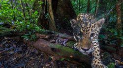La distruzione dell'Amazzonia è un crimine contro