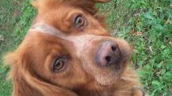 Condenan a 11 meses de prisión a un individuo acusado de pisar a un perro hasta la