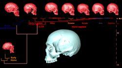 Le crane virtuel de l'ancêtre commun d'Homo Sapiens ressemblerait à