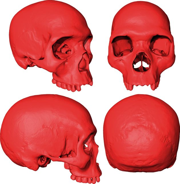 Et si l'ancêtre commun d'Homo sapiens ressemblait à ça