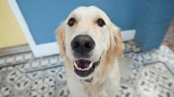 What You Should Know About Giving Your Dog