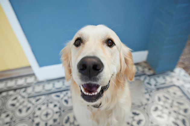 CBD products for dogs – whether oil or in a treat – have been shown to anecdotally help with...