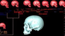 Le crâne virtuel de l'ancêtre commun d'Homo sapiens ressemblerait à