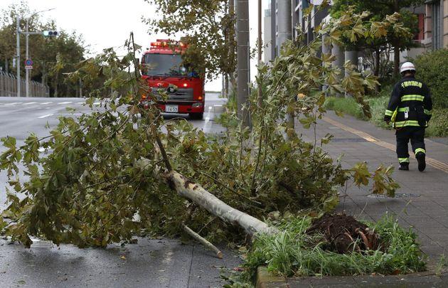 台風15号の暴風で倒れた街路樹=9月9日午前、千葉市美浜区