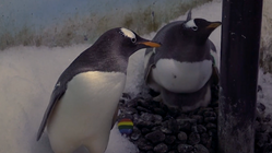 London's Same-Sex Penguin Couple Are Set To Raise 'Genderless'