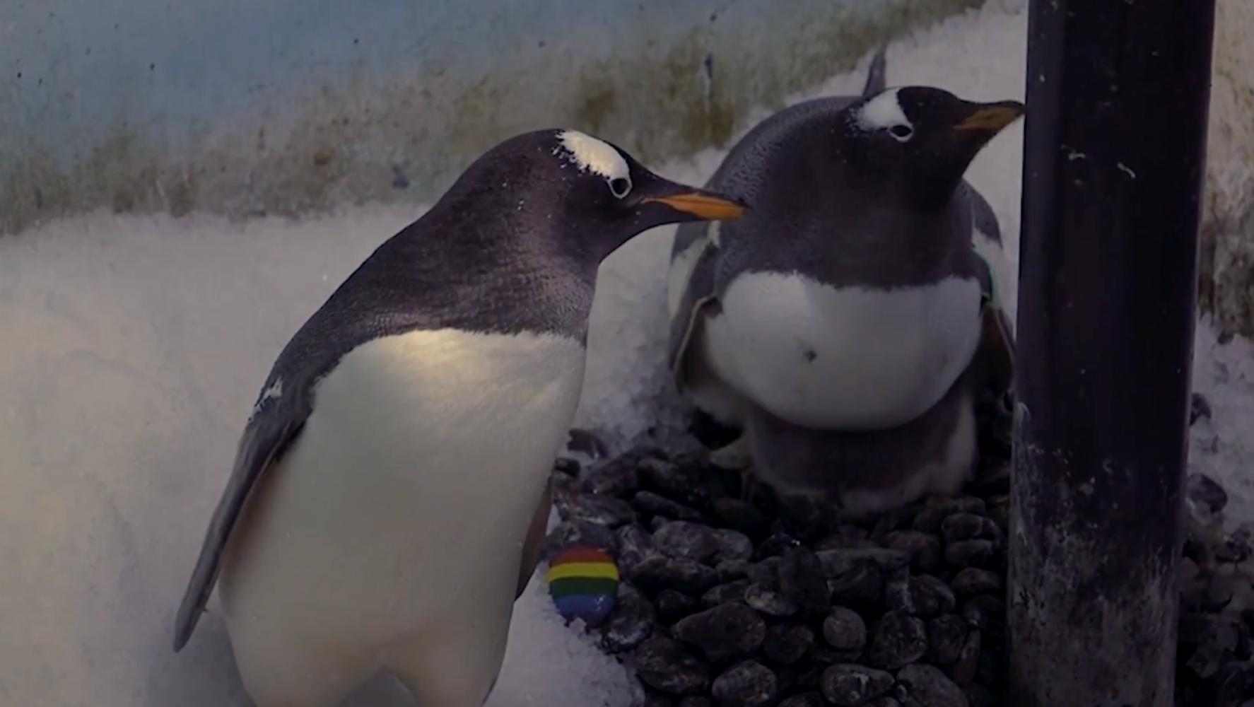 London's Same-Sex Penguin Couple Are Set To Raise 'Genderless' Chick